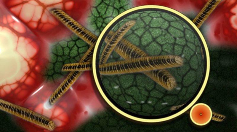 Alertan de una peligrosa 'superbacteria' de transmisión sexual resistente a antibióticos